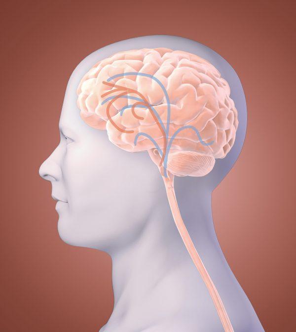 Brain Fibromalgia