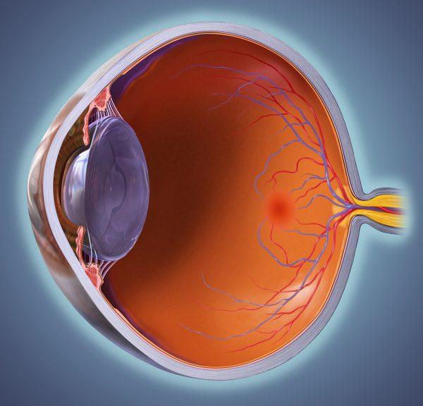 Eye Whole