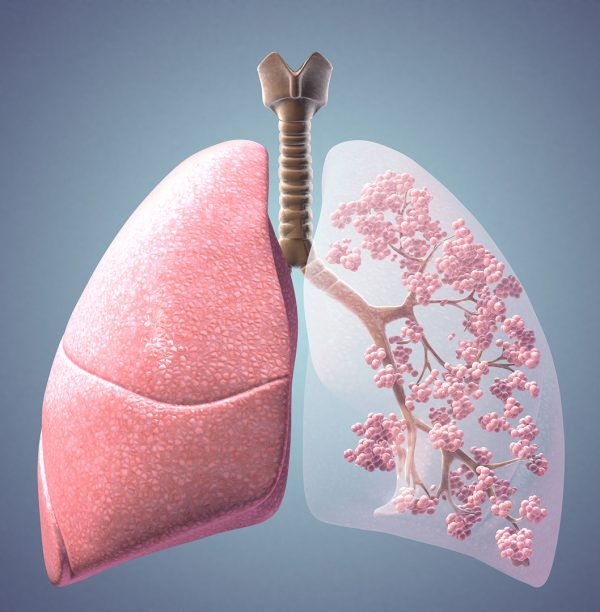 Lung Trachea Alveoli