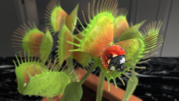 venus flytrap catching a ladybug
